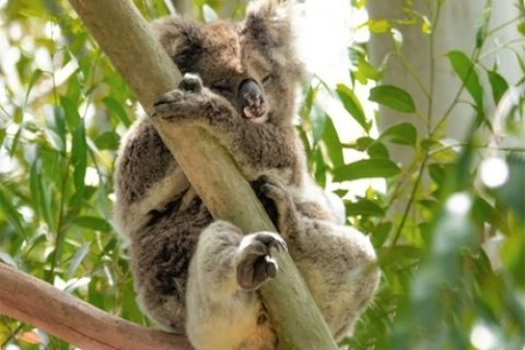 Warrawong Wildlife Sanctuary Weekend Entry for One ($8.50) or Two ($17) or Four People...